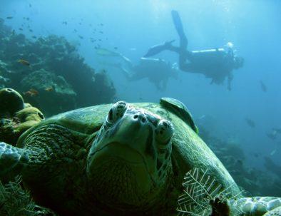 Turtle under sea