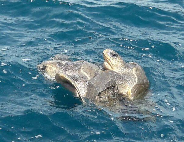 turtles at the sea