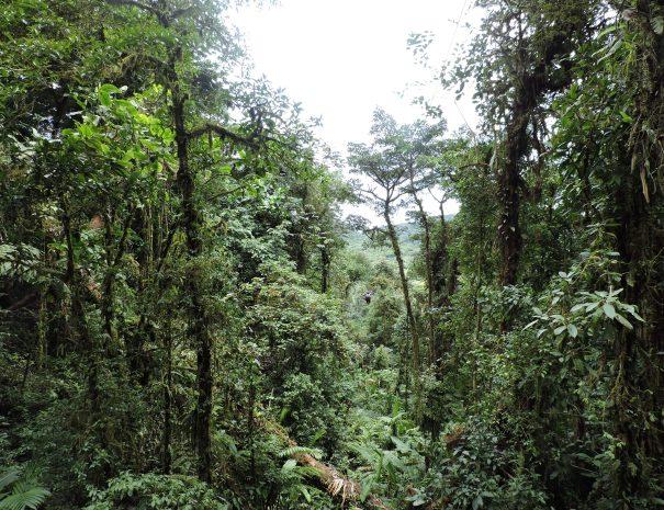 wildforest