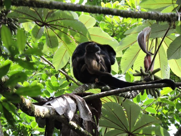 Day Trips from Monteverde