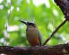 bird bluezonecr.com