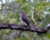 eagle bluezonecr.com