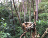 forest samara
