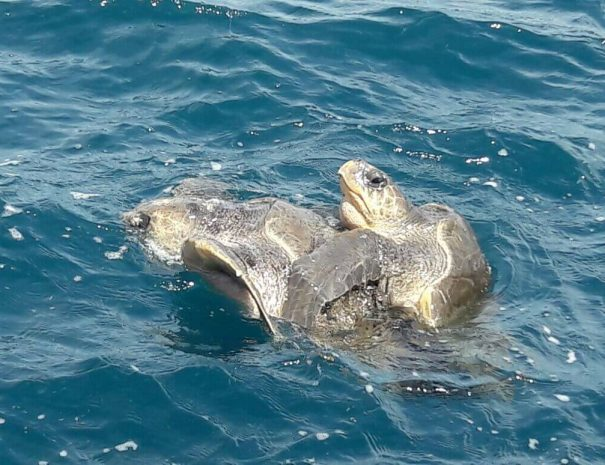turtles at the sea