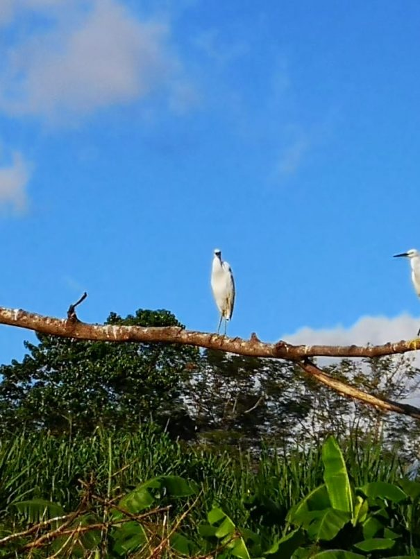 birds at rio Ora