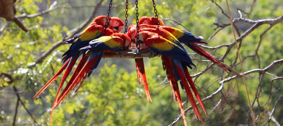 Wild Macaw Reserve