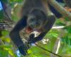 monkey bluezonecr.com