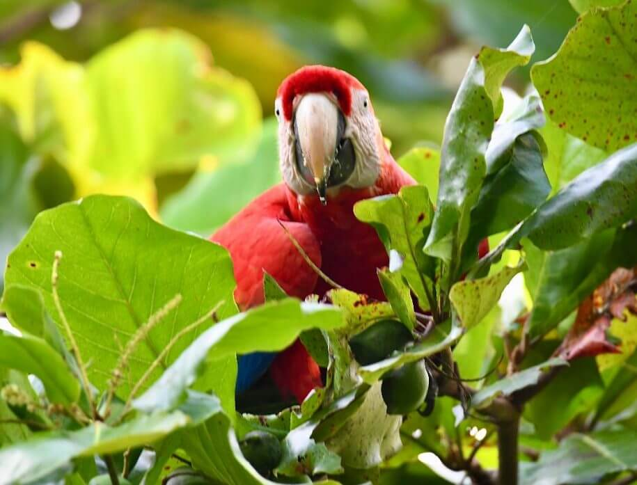 Macaw Recovery Network